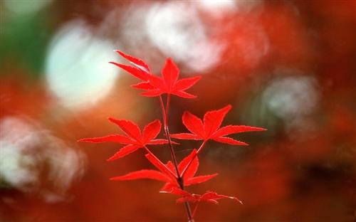 秋天感悟人生的短句-早安心语优美的语句